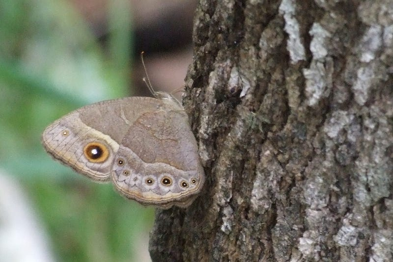 Butterflies switch up sex roles depending on how cold it is