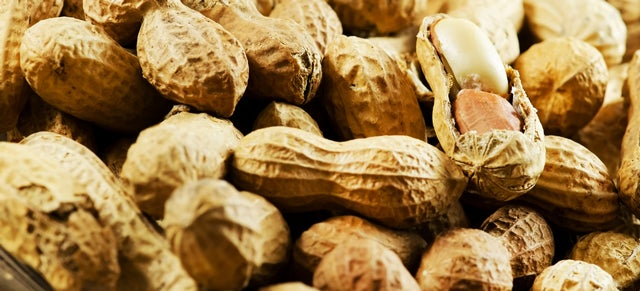 A Gut Microbe Could Be the Key to Stopping Peanut Allergies