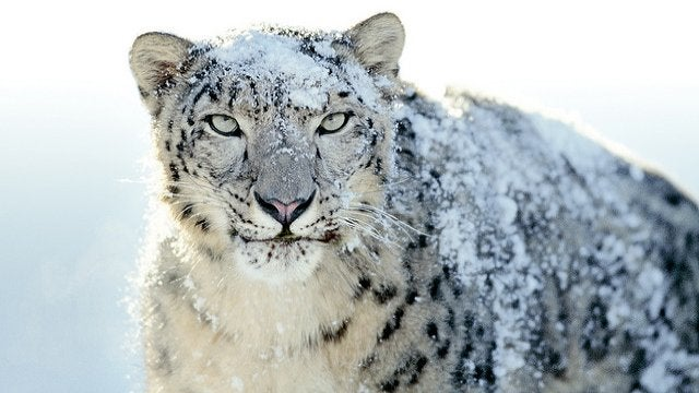 Snow Leopard Revised Security Update Fixes Rosetta Problems