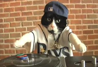 Here's a Video of a Cat on the Turntables
