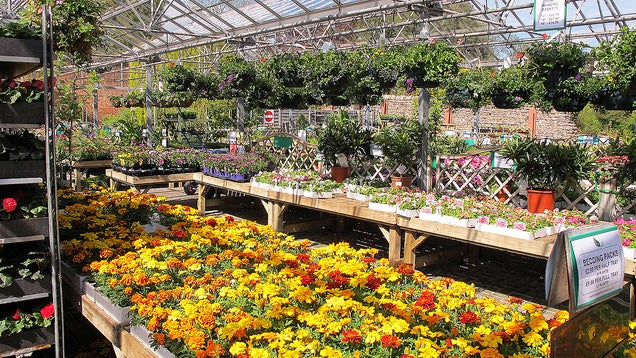 Top 10 Ways to Get Your Dream Garden Ready This Year