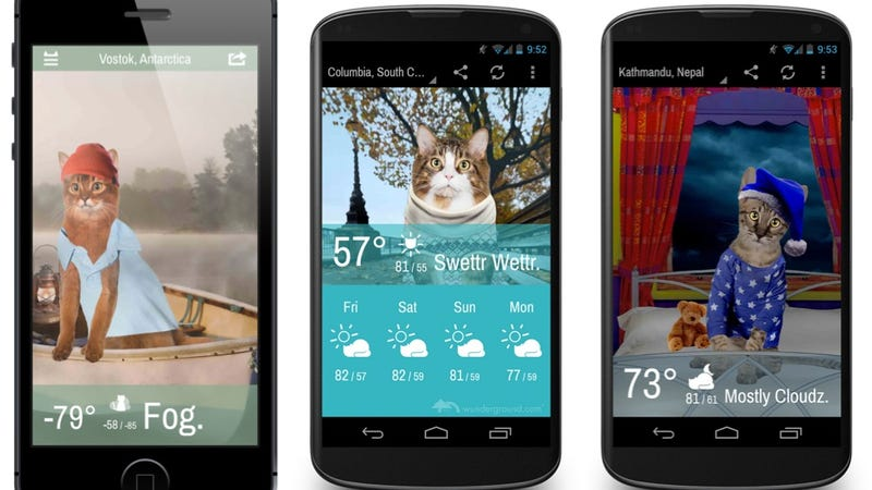 You Need This Weather App Starring Adorable Kittens