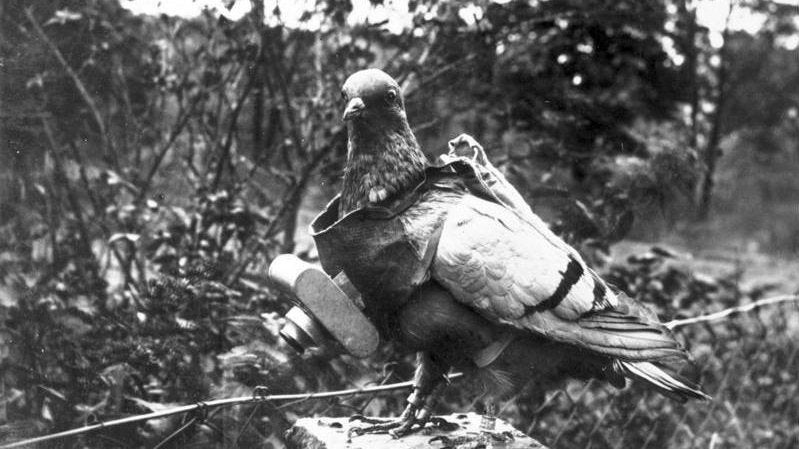 Early Aerial Photography: Cameras on Pigeons in 1907