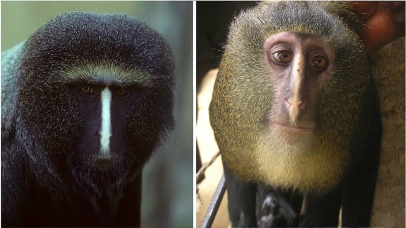Scientists Discover New, Hairless-Assed Monkey