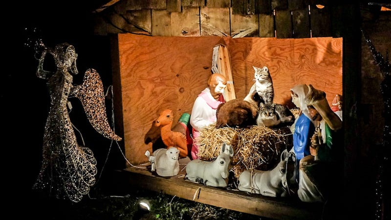 Feral Cats Declare War on Christmas, Seize Nativity Scene