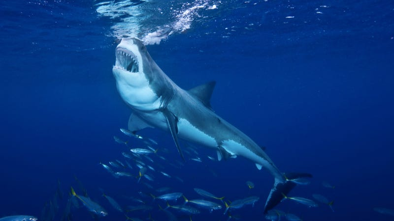 10 reasons to bow down before your shark overlords