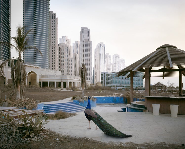 The Ruins of Dubai with Wild Animals. Hey, This Could Be a Sony Video Game.