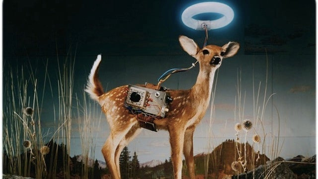 Scenes from the Cyborg Forest, where animals make up for their shortcomings with technology