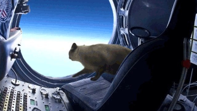 The Space Jump, Recreated by a Cat