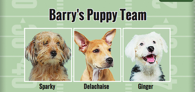 It's Time To Draft Your Fantasy Puppy Bowl Team