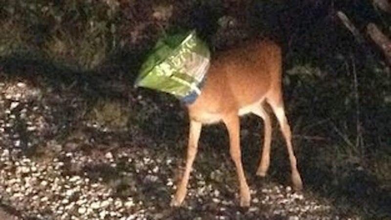 Chip-Loving Deer Rescued After Getting Doritos Bag Stuck on His Head