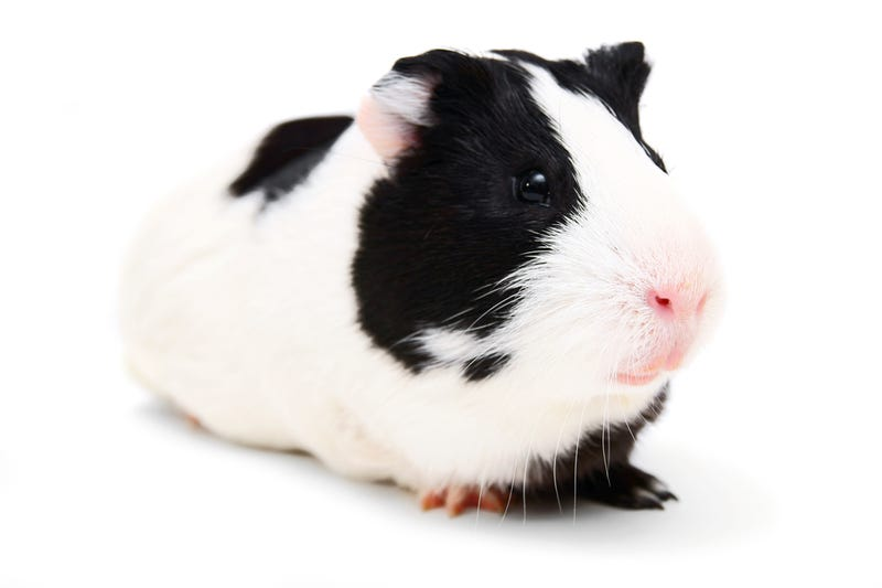 European Union Bans All Animal Testing of Cosmetics