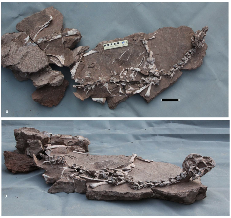 Newly Discovered Oviraptor Suffered a Slow, Miserable Death