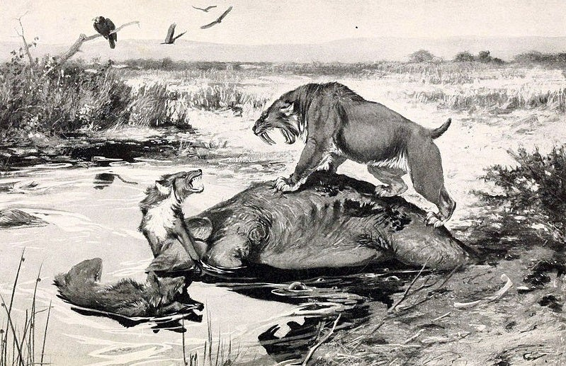 The Truth About Real-Life Dire Wolves