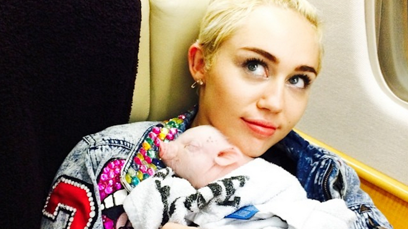 Miley Cyrus Adopted a Little Tiny Piglet
