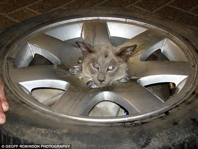 Trapped Cat Begs For LOL Treatment • Orobator To Serve Sentence In UK