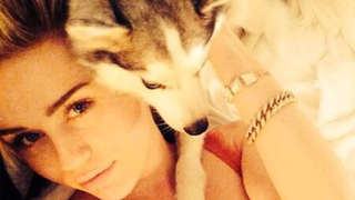 The Sad Tale of Miley Cyrus and Her Dying Dogs: An Explainer