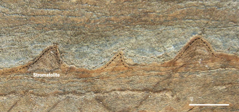 Life on Earth Emerged Millions of Years Earlier Than We Thought