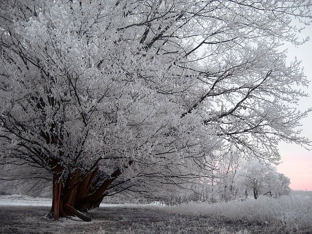 How an ice storm uproots a tree
