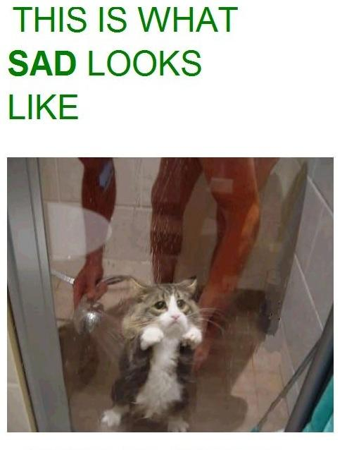 In Which I Post Sad Kitties