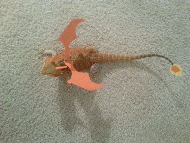 The Best Charizard Costume Around, Hands Down