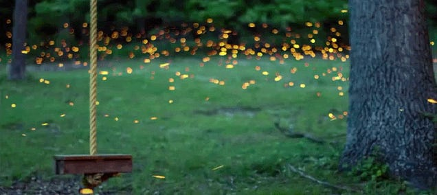 This time lapse of fireflies is art in motion