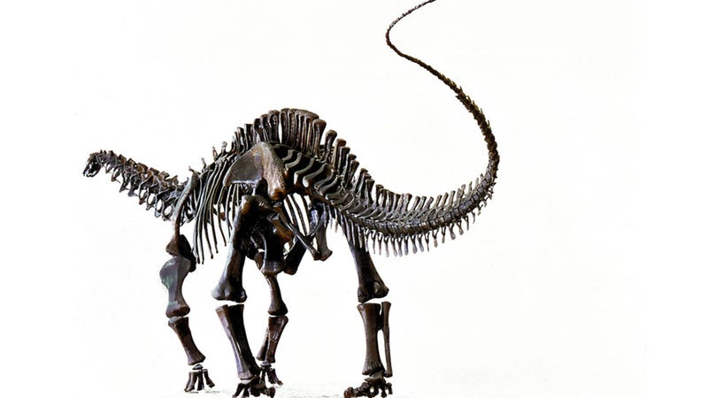 10 Dino Fossils for National Fossil Day
