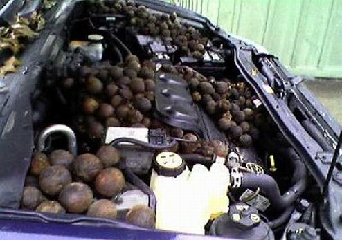Woman Finds Thousands Of Walnuts Stashed In Engine Bay By Chipmunk