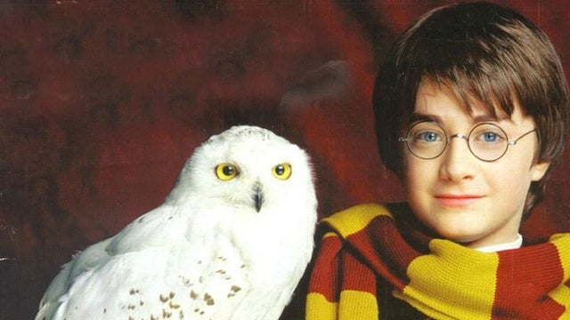 The end of Harry Potter leaves hundreds of pet owls homeless