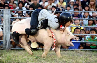 Pig Rodeo Rides Home The Bacon