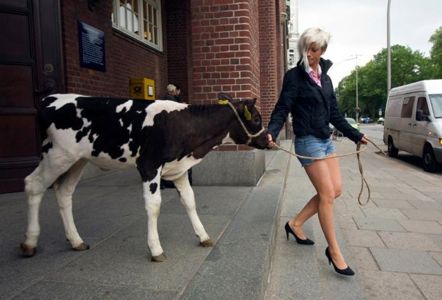 German Women Adept At Milking Cows, Plowing Fields Vie For Calendar-Modeling Gig