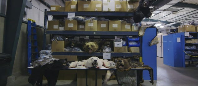This Warehouse Holds All Illegal Wildlife Goods Confiscated In The U.S.