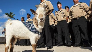 "Seafaring ""Salty Goat"" Sinks Navy Cruiser Captain's Career"