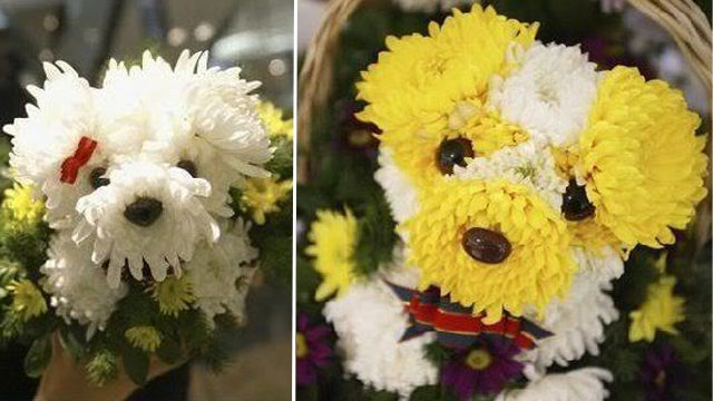 OMFG, Puppy Bouquets!