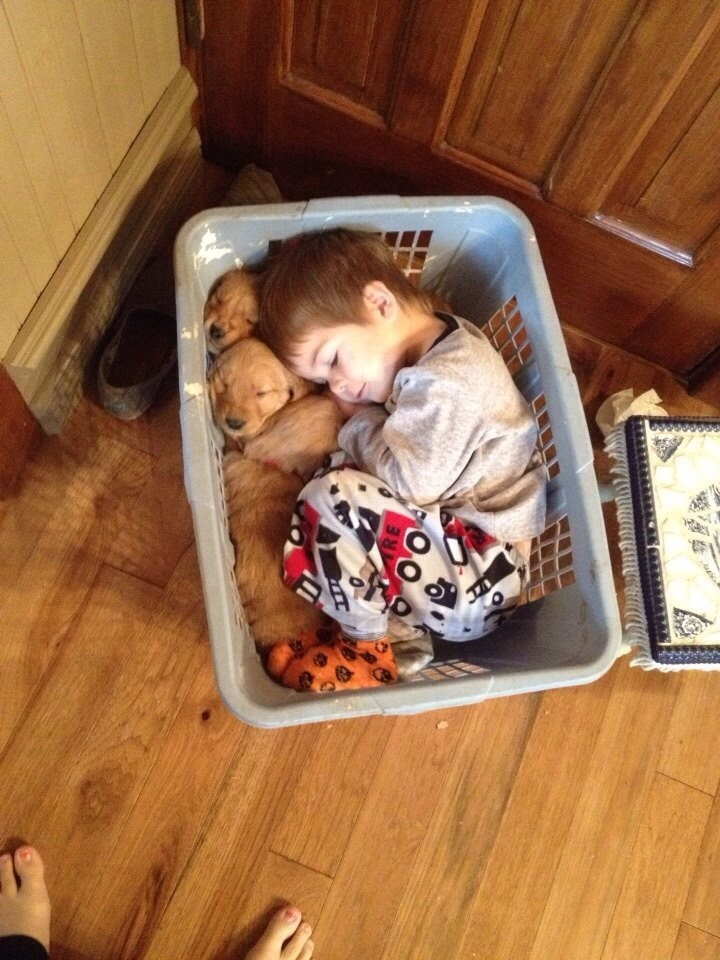Curl Up With Your Puppies On Today's Open Thread