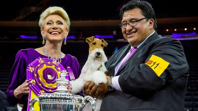 Meet Sky, the Wire Fox Terrier Who Just Won the Westminster Dog Show
