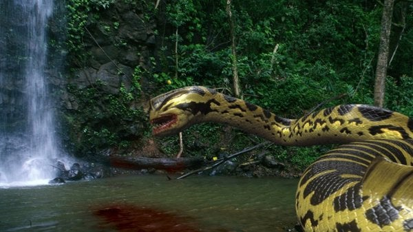 Piranhaconda Pictures