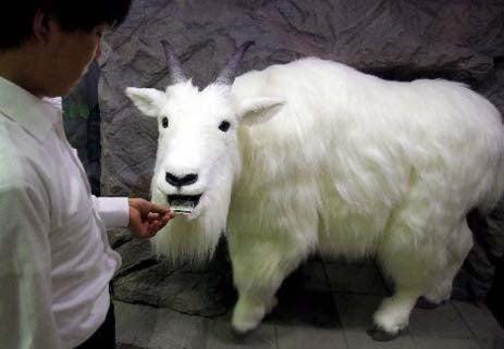 Robot Goat Feeds on Broken Dreams