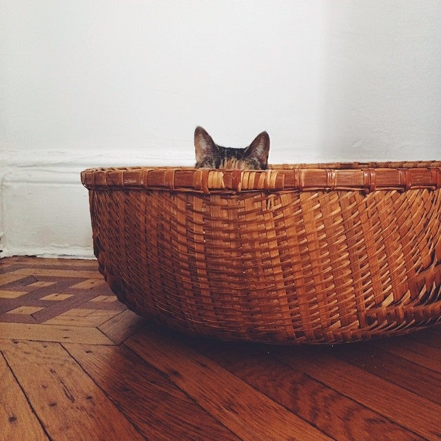 Post Photos of Your Cat Here to Celebrate World Cat Day