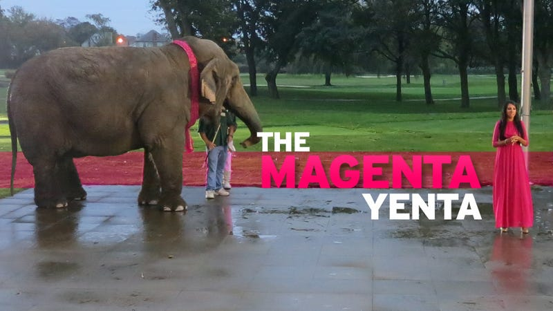 Giving the Elephant a Pink Manicure: A Night Out With Mindy Meyer, the Internet's Candidate for Senate