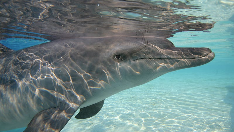 We Killed Another Dolphin by Loving It Too Much
