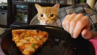 Trying to eat with a cat around