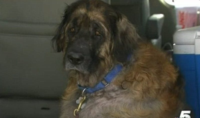 Vet Accused of Illegally Keeping Dogs Alive for Blood Transfusions