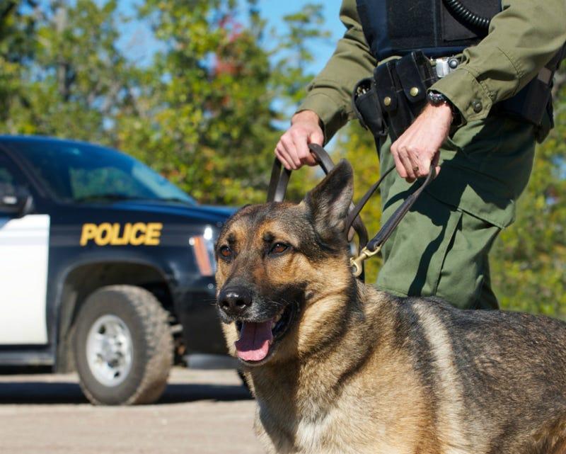 Man Barks at K-9 Officer at DUI Checkpoint, Gets Arrested