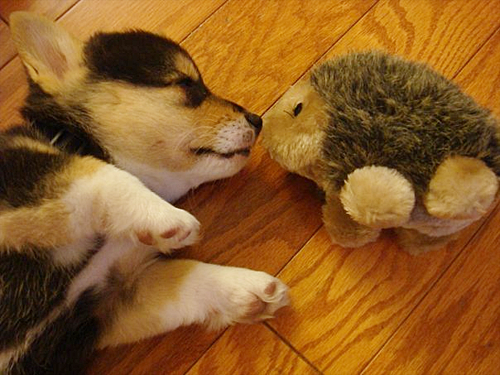 10 Photos Of Animals With Stuffed Animals