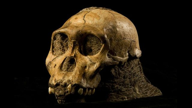 Why Australopithecus sediba could rewrite our evolutionary history
