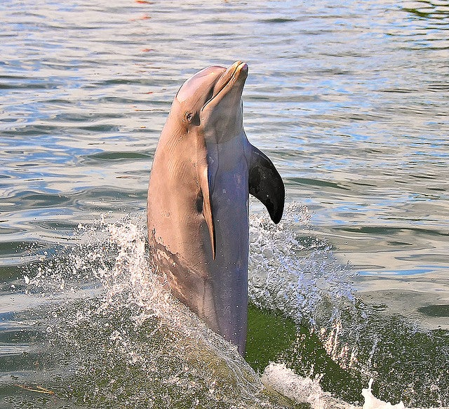 Dancing Dolphins in the Wild Show They're Smarter Than We Once Thought