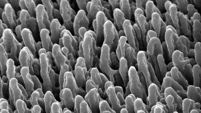 Scientists Accidentally Discover Incredible Bacteria-Killing Surface