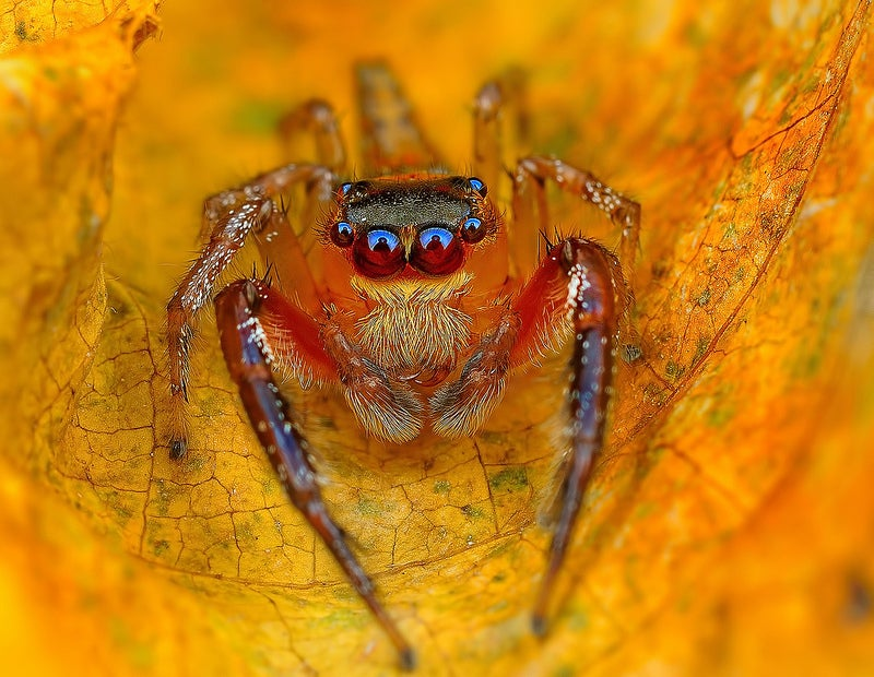 Staring at these spiders straight in the eyes is sucking my soul away