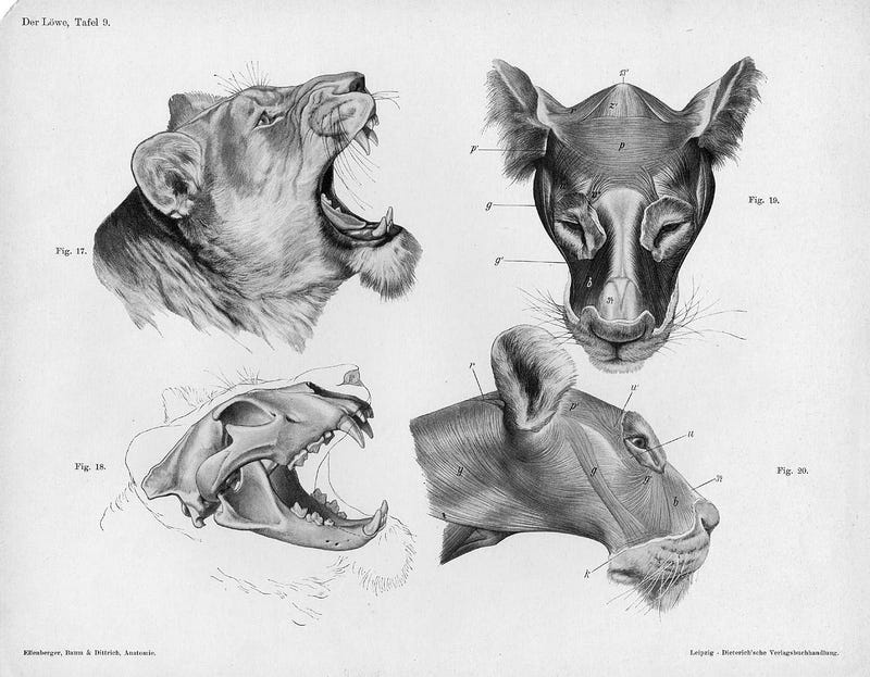 Lose Yourself In The Gorgeous Anatomical Drawings of Hermann Dittrich